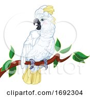 Perched White Cockatoo