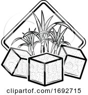Cane Sugar And Cubes