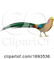 Golden Pheasant Bird