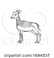 Mhorr Gazelle Endangered Wildlife Cartoon Drawing