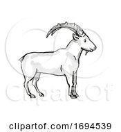 Nubian Ibex Endangered Wildlife Cartoon Drawing