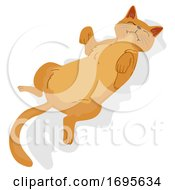 Cat Pet Show Belly Illustration