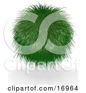 Grassy Green Ball Plant