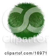 Environmental Clipart Illustration Image Of A Green Ball Grass Plant