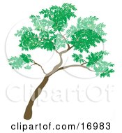 Big Green Tree Leaning To The Right Clipart Illustration