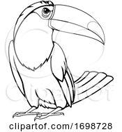 Toucan Bird Mascot
