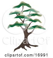Large Juniper Tree With Green Foliage Tufts Clipart Illustration
