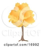 Oak Tree With Orange Autumn Foliage Leaves In The Fall Clipart Illustration