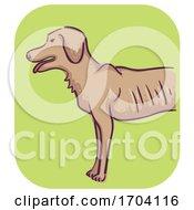 Poster, Art Print Of Dog Symptom Weight Loss Illustration