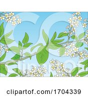 Poster, Art Print Of Branches And Spring Blossoms