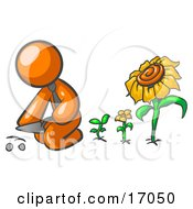 Orange Man Kneeling By Growing Sunflowers To Plant Seeds In A Dirt Hole In A Garden Clipart Illustration