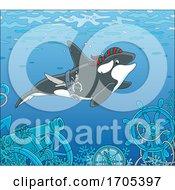 Pirate Killer Whale Orca Swimming