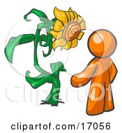 Orange Man Proudly Standing In Front Of His Giant Sunflower In His Garden Clipart Illustration by Leo Blanchette