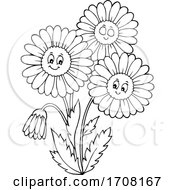 Black And White Daisy Flowers