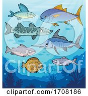 Group Of Fish