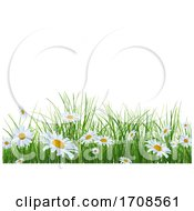 Grass And Daisy Background On White