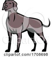 Weimaraner Dog Standing