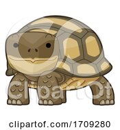 Desert Tortoise Illustration