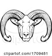 Black And White Mouflon Sheep