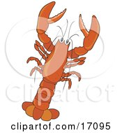 Large Red Lobster With Claws by Maria Bell