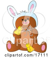 Cute Bear Wearing Easter Bunny Ears And Playing With Two Yellow Chicks Clipart Illustration by Maria Bell