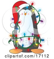 Adorable Black And White Penguin Bird Wearing A Santa Hat Adorned With Holly And Berries Tangled In A Mess Of Colorful Christmas Lights Clipart Illustration