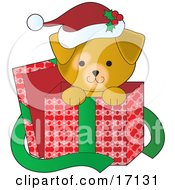 Cute Yellow Lab Puppy Dog Wearing A Santa Hat With Holly On It Peeking Out Of A Christmas Present Box After Being Given As A Gift Clipart Illustration by Maria Bell