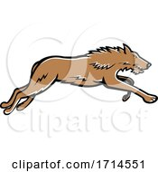 Scottish Deerhound Running