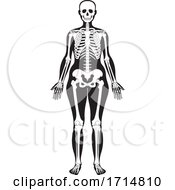05/31/2020 - Female Human Skeleton In Black And White