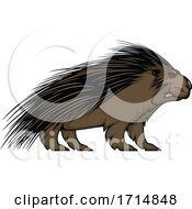 Angry Red Eyed Porcupine by Vector Tradition SM #COLLC1714848-0169