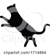 05/31/2020 - Silhouette Cat Pet Animal