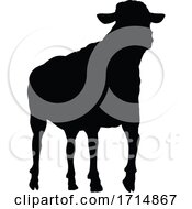 Sheep Or Lamb Farm Animal In Silhouette