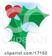 Two Green Holly Leaves With Three Red Berries On Christmas