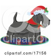Scottie Scottish Or Aberdeen Terrier Puppy Dog Wearing A Bandana Around His Neck And A Santa Hat On His Head Standing On A Plaid Rug After Being Given As A Gift On Christmas Clipart Illustration by Maria Bell