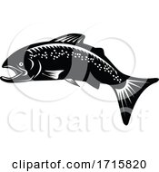 Speckled Trout Fish