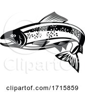 Black And White Trout Or Speckled Trout Fish