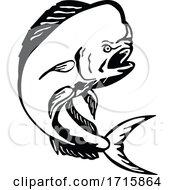 Angry Mahi Mahi Dorado Dolphinfish Jumping Etching Black And White