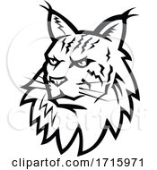 Head Of Maine Coon Cat Mascot Black And White