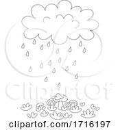 Rain Cloud Over Mushrooms