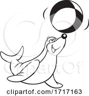 Seal Playing With A Beach Ball by Johnny Sajem