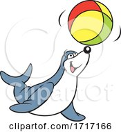 Seal Playing With A Beach Ball