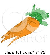 Three Perfect Orange Carrots With Leaves Clipart Illustration by Maria Bell