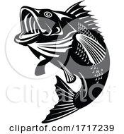 Florida Largemouth Bass Swimming Up Black And White Retro
