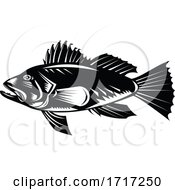 Black Sea Bass Or Asian Sea Bass Side View Retro Woodcut Black And White