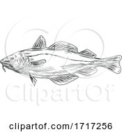 Atlantic Cod Codling Fish Viewed From Side Drawing Black And White