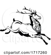 Red Deer Stag Running And Jumping Side View Retro Black And White