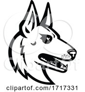 Belgian Malinois Belgian Shepherd Dog Mascot Black And White