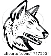 Gray Wolf Or Arabian Wolf Head Mascot Black And White