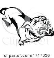 Poster, Art Print Of Angry Pit Bull Or Pitbull Barking Retro Black And White