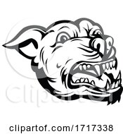 Poster, Art Print Of Head Of Angry Pit Bull Or Pitbull Barking Retro Black And White